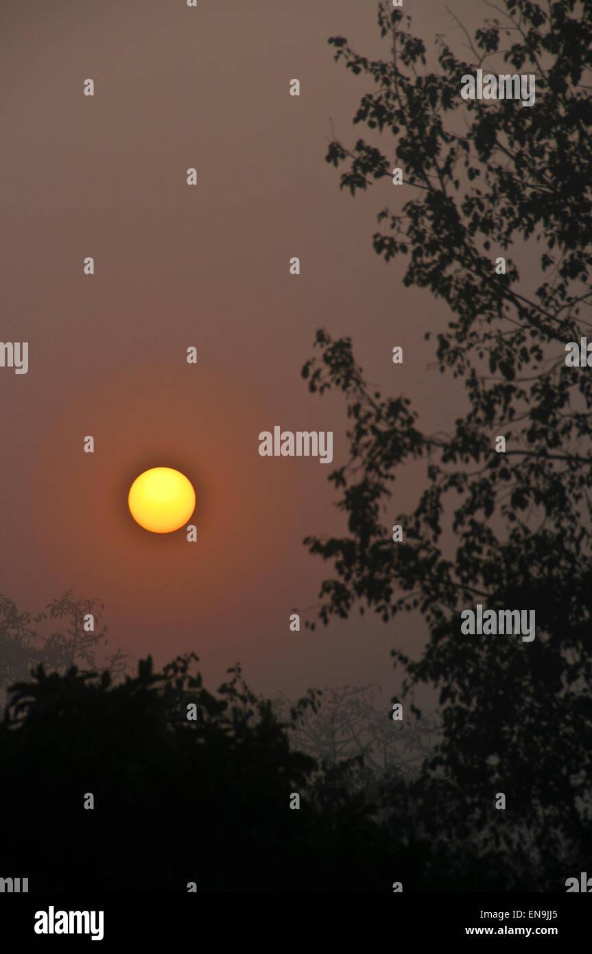 Sunrise over misty Chitwan - Stock Image