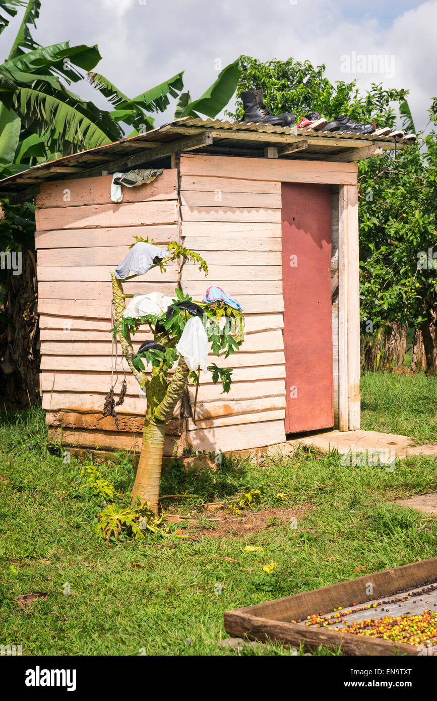 Cuba valley Valle Vinales smallholding farm privy with shoes on roof knickers pants hang on bush small tree coffee - Stock Image
