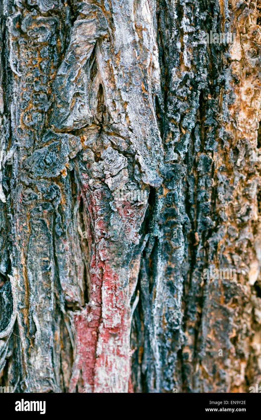 Multi Colored Tree Bark For Illustration And Pictures Stock Photo