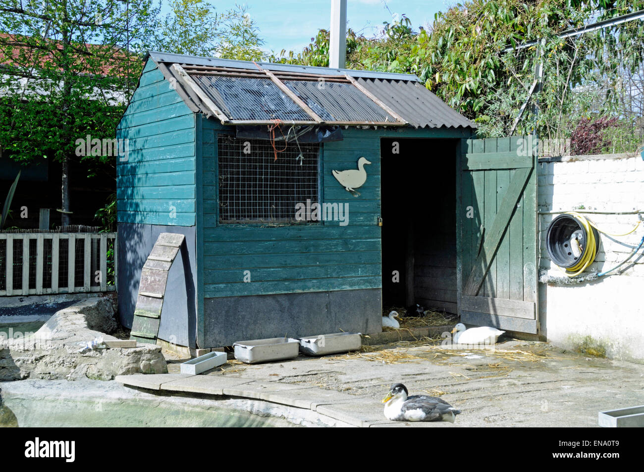 Roosting Shed for geese Freightliners Farm, Holloway, London Borough of Islington, England Britain UK - Stock Image