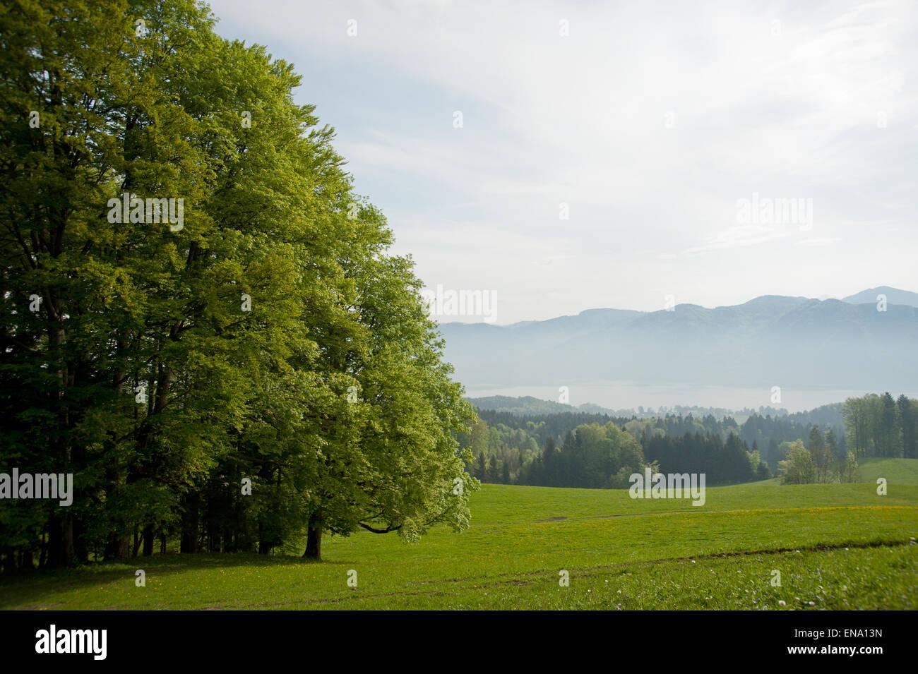 Blick über den Attersee von Aichereben, Salzkammergut, Austria - Stock Image