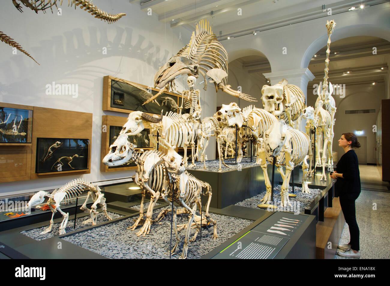 Hessisches Landesmuseum Darmstadt, Abteilung Zoologie, Darmstadt, Hessen, Deutschland | Museum Darmstadt, Hesse, - Stock Image