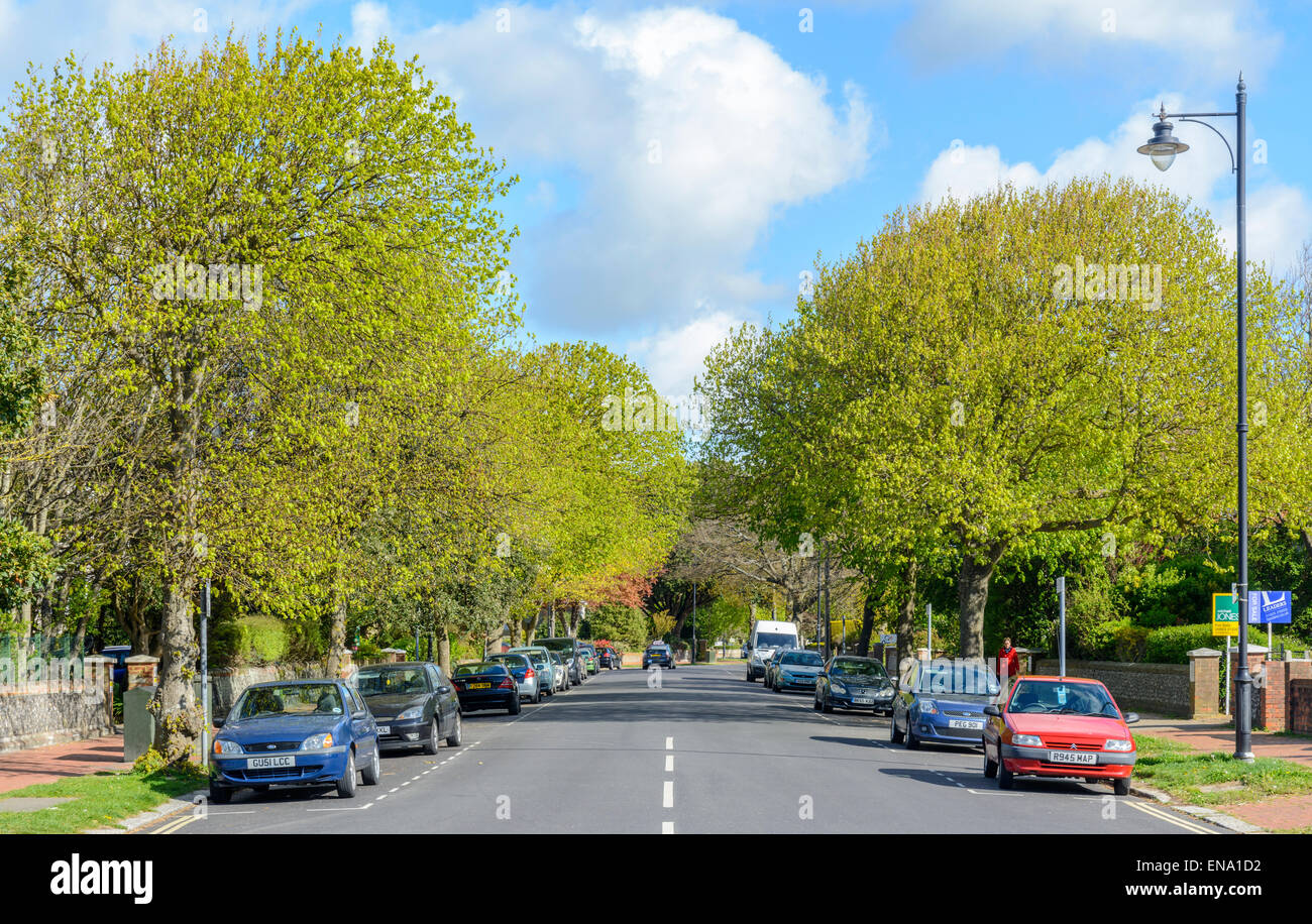 A wide straight residential road with trees either side and blue sky above, in Southern England, UK. - Stock Image