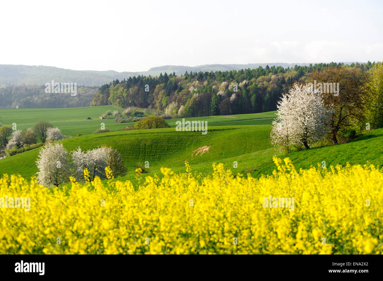 Landscape in the spring in the northwestern Odenwald, Hesse, Germany - Stock Image