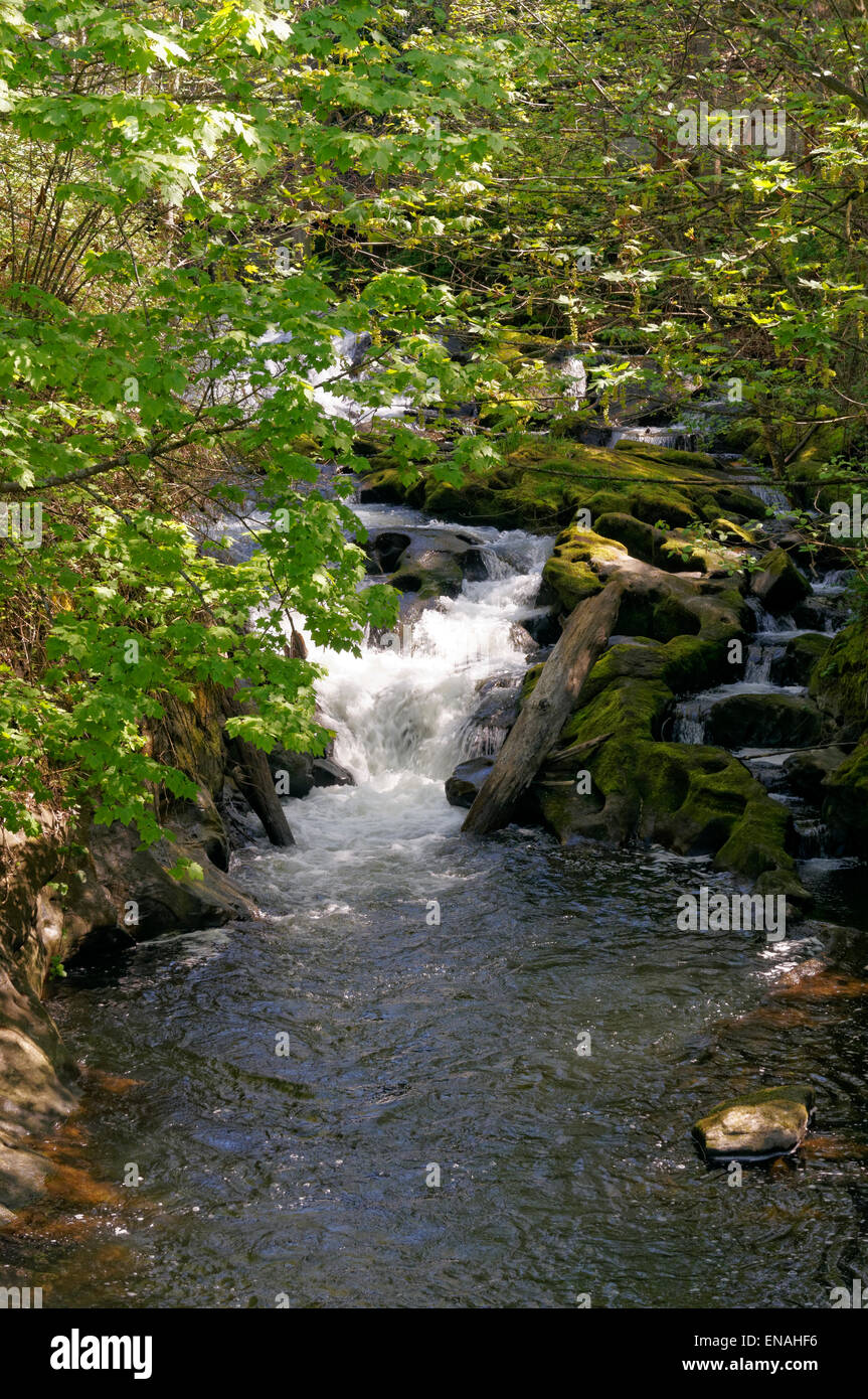 Rushing water in Whatcom Creek, Maritime Heritage Park, Bellingham, Washington state, USA - Stock Image