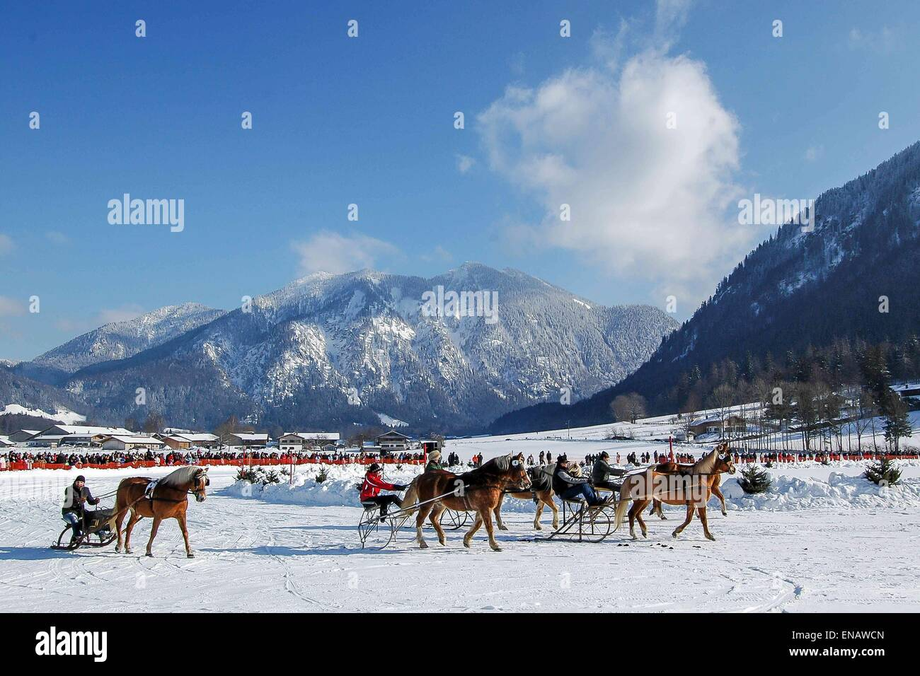 Rottach-Egern  horse-drawn sleigh race at the foot of Wallberg Stock Photo