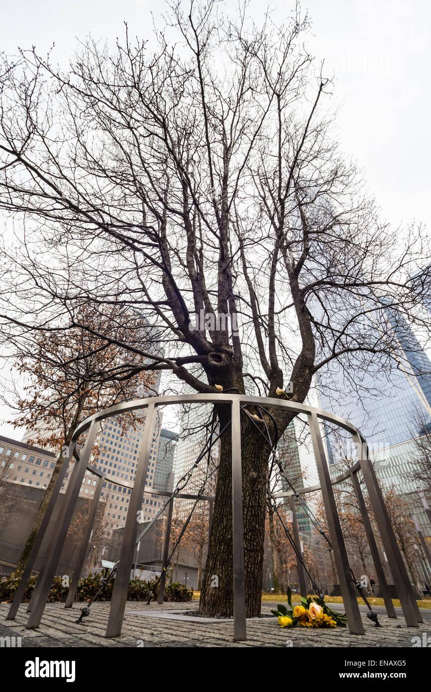 Survivor Tree, Manhattan, New York. - Stock Image