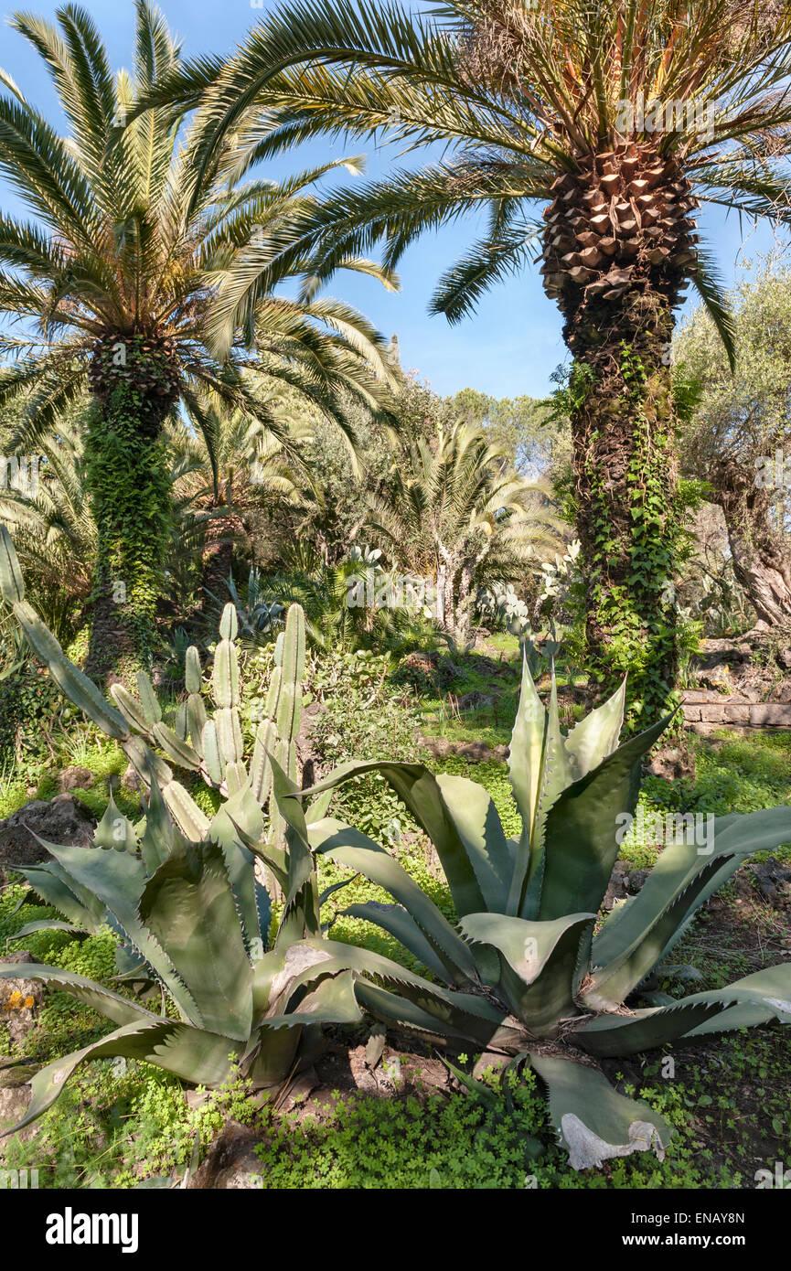 villa paterno catania sicily italy palm trees and. Black Bedroom Furniture Sets. Home Design Ideas