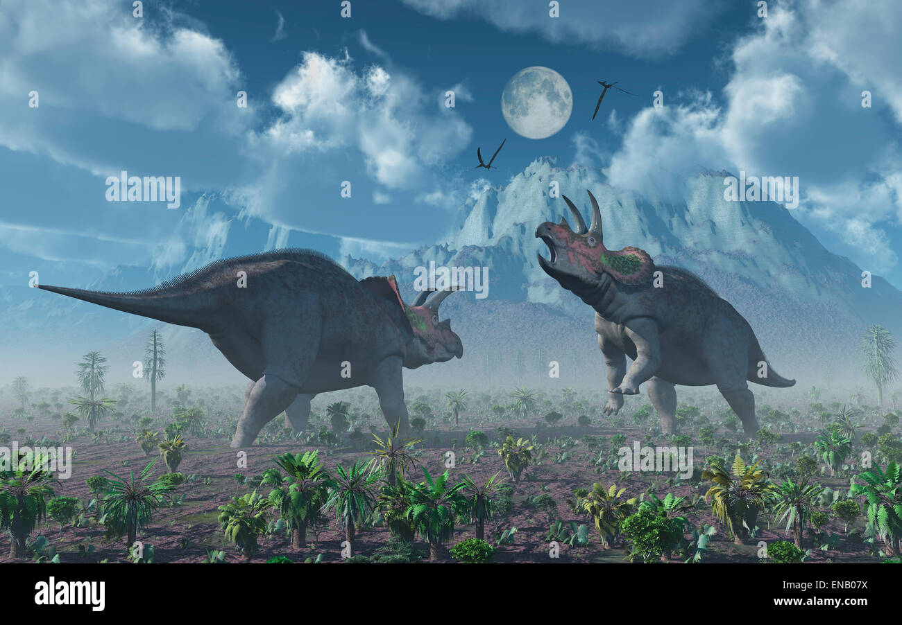 Confrontation Between Two Male Triceratops Dinosaurs Stock Photo