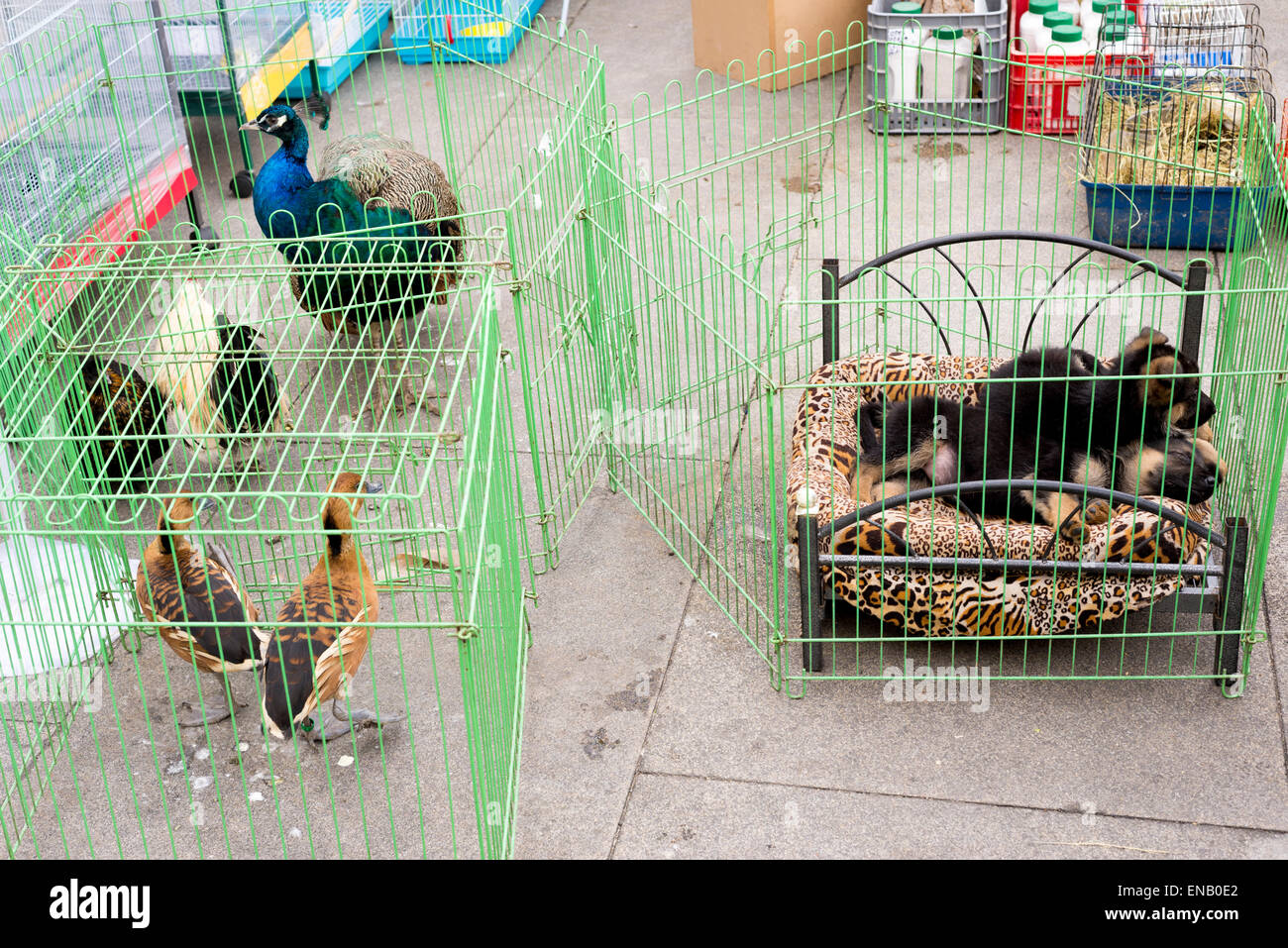caged animlas and birds at street market, Porto, Portugal - Stock Image