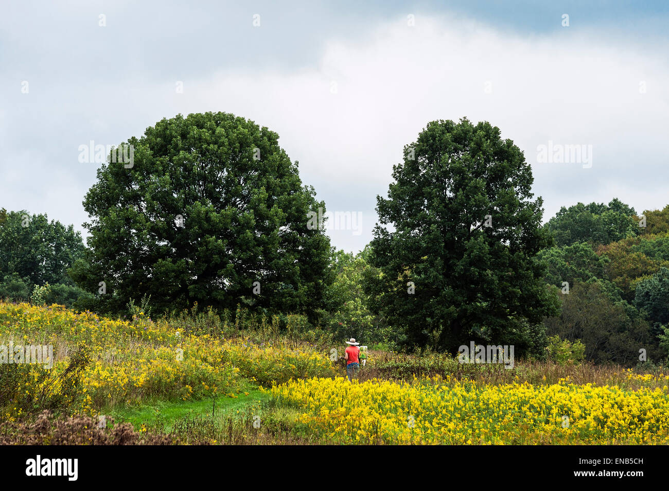 Plein air artist painting in a meadow of flowers. Stock Photo