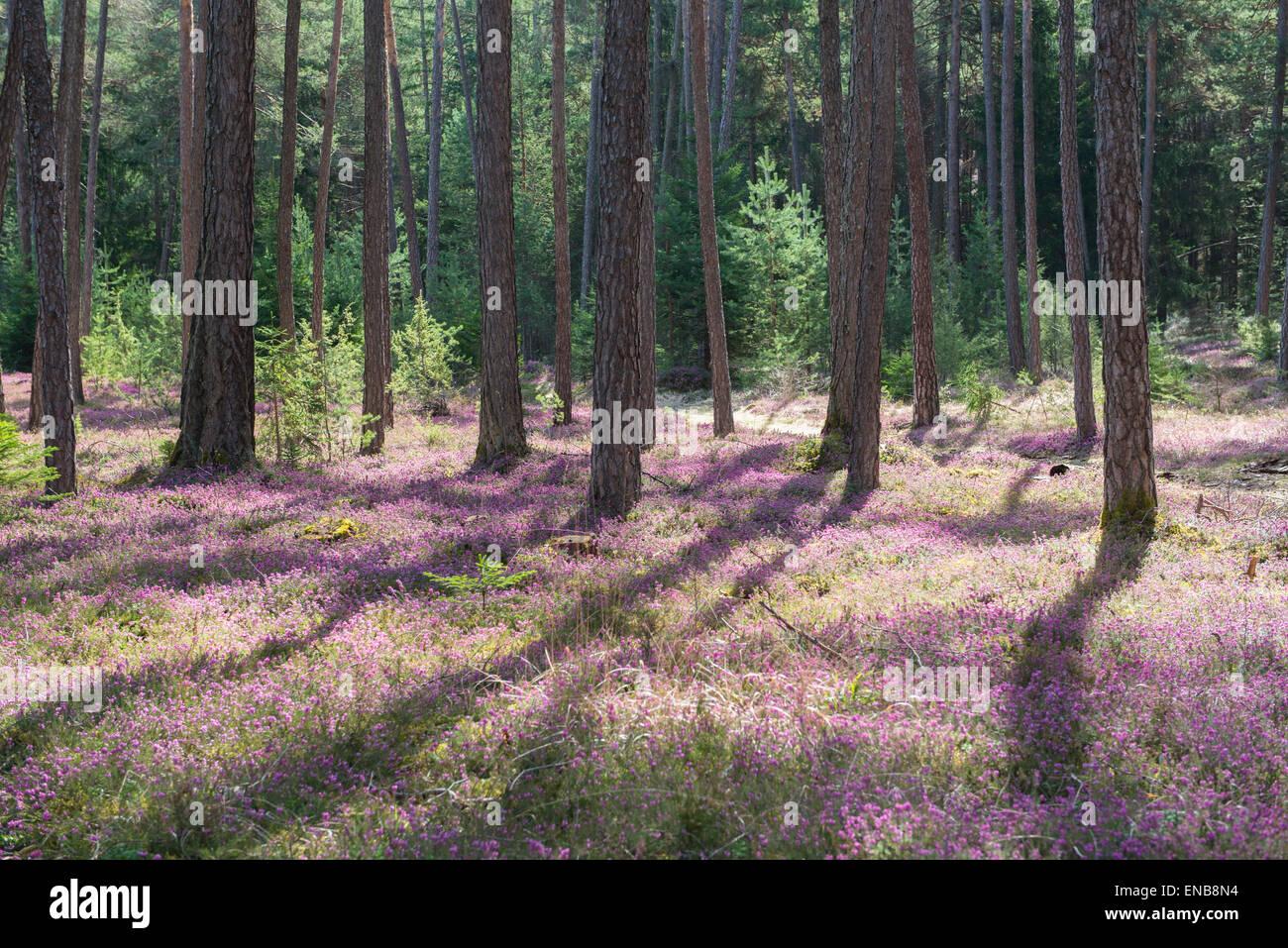 pictures Mature erica austria