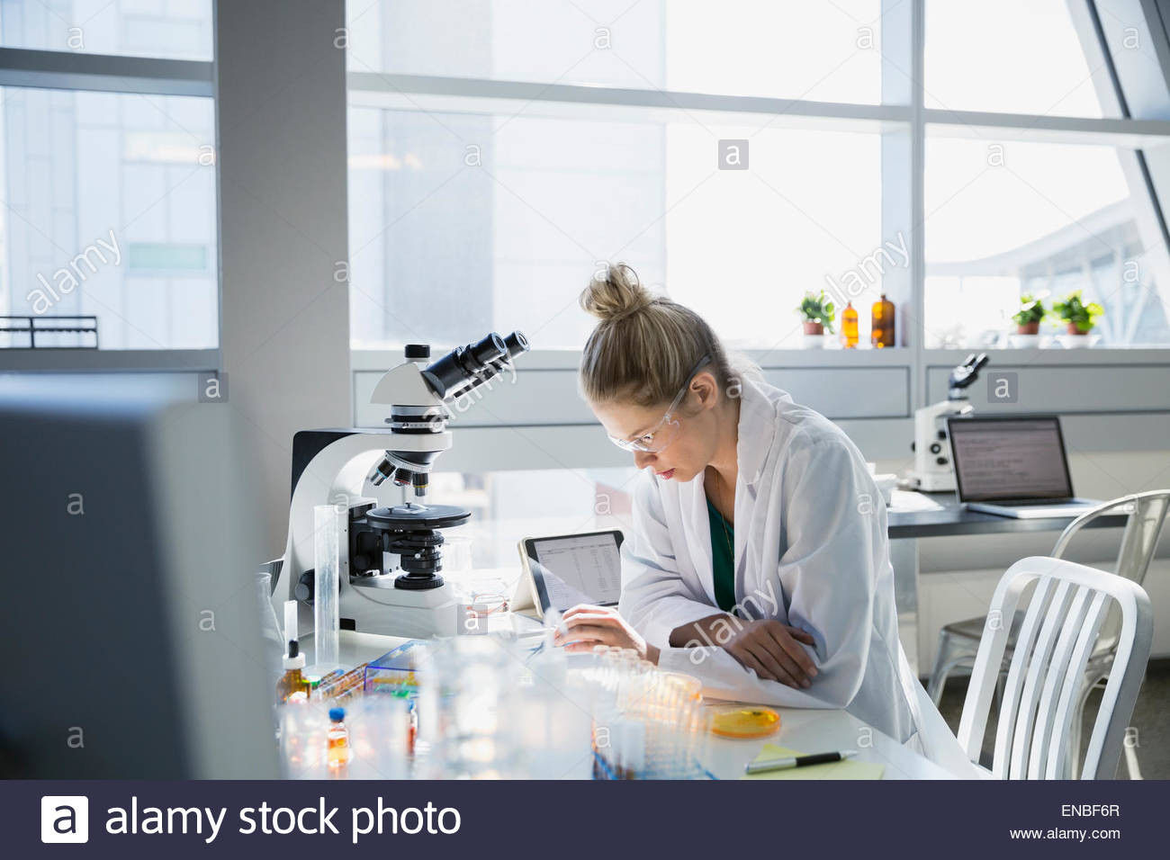 Scientist conducting scientific experiment in laboratory - Stock Image