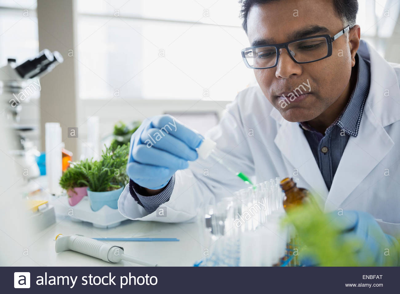 Scientist adding liquid to test tubes in laboratory - Stock Image