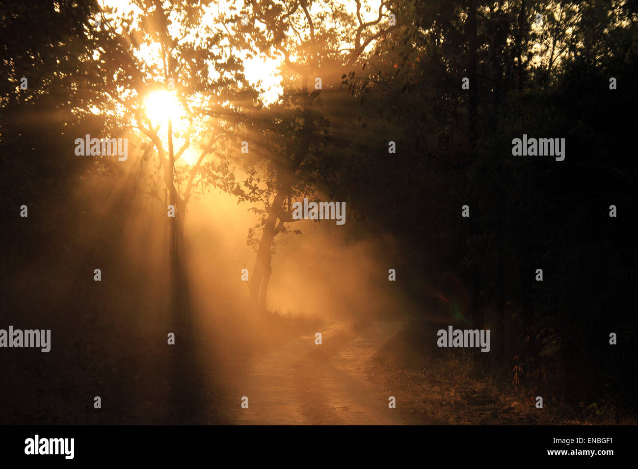 Sunbeams Breaking through the Forest at Early Morning Game Drive in Kanha National Park, Madhya Pradesh, India - Stock Image