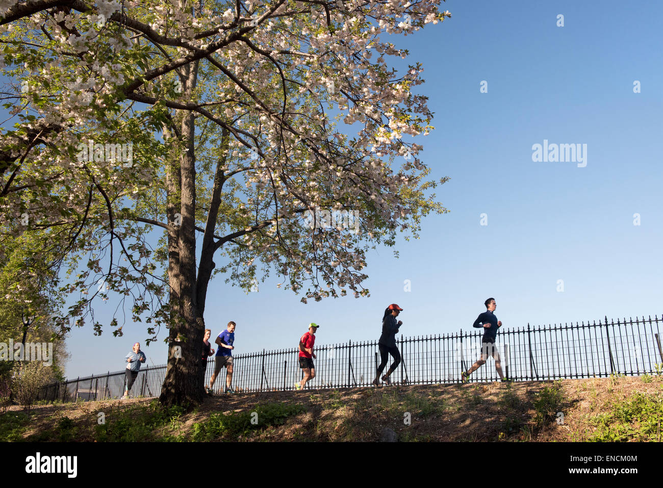 Runners at the Jacqueline Kennedy Onassis Reservoir in Central Park, NYC early on a spring morning - Stock Image