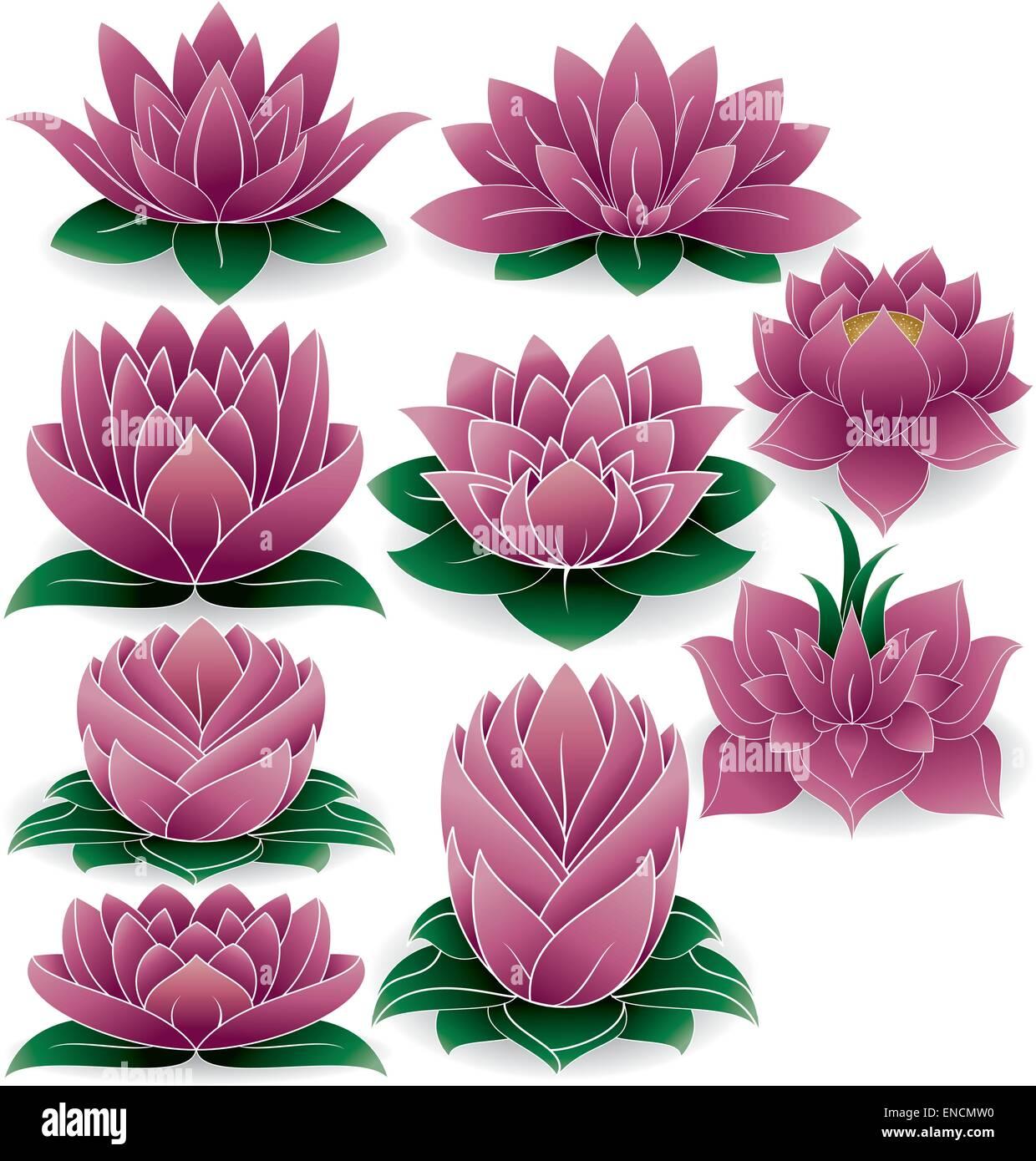 Lotus Flower Meditation Stock Photos Lotus Flower Meditation Stock
