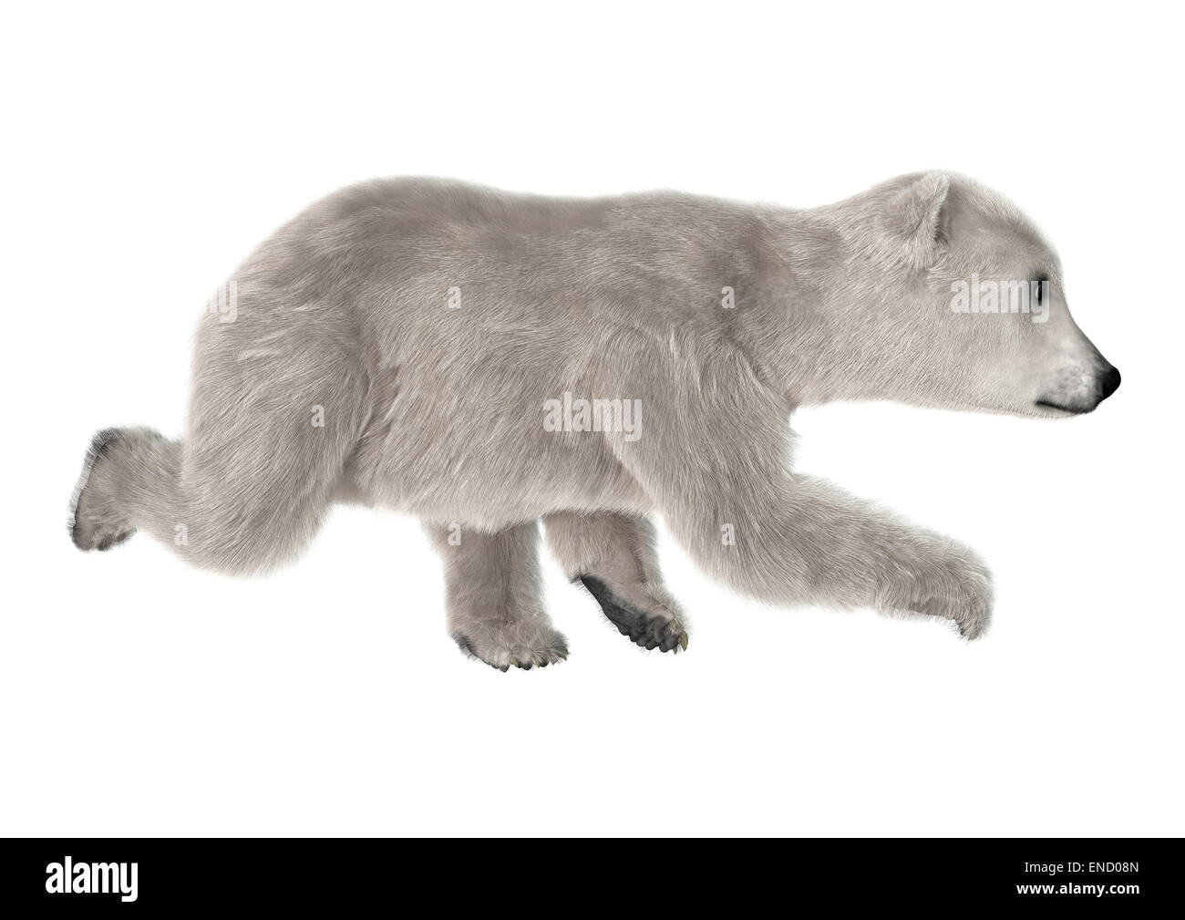 67b12f97f4a 3D digital render of a polar bear cub running isolated on white background  - Stock Image