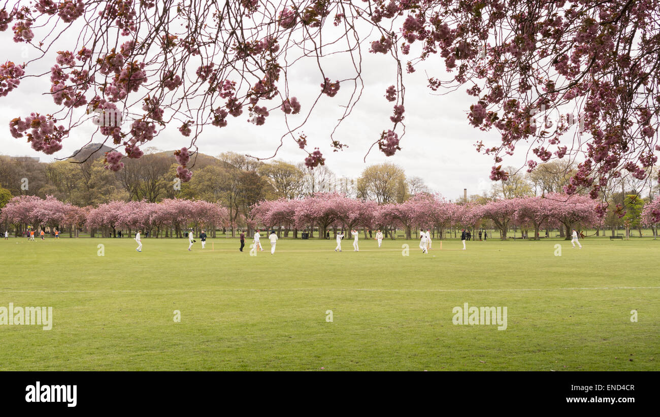 Spring cricket match being played in The Meadows public park, Edinburgh, Scotland, UK beneath Arthur's Seat Stock Photo