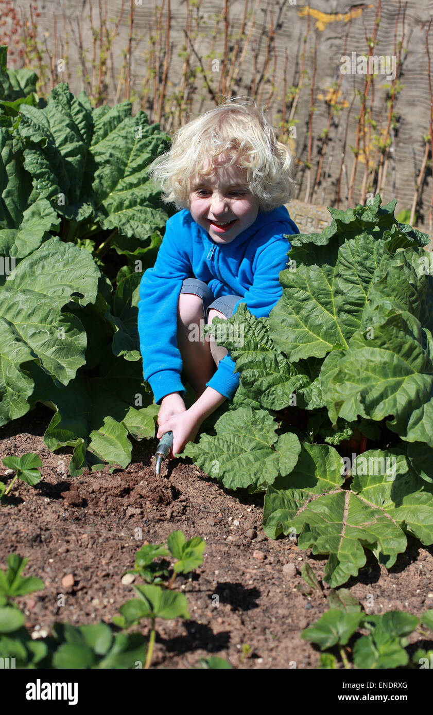 Blonde haired boy digging in the garden on sunny day - Stock Image