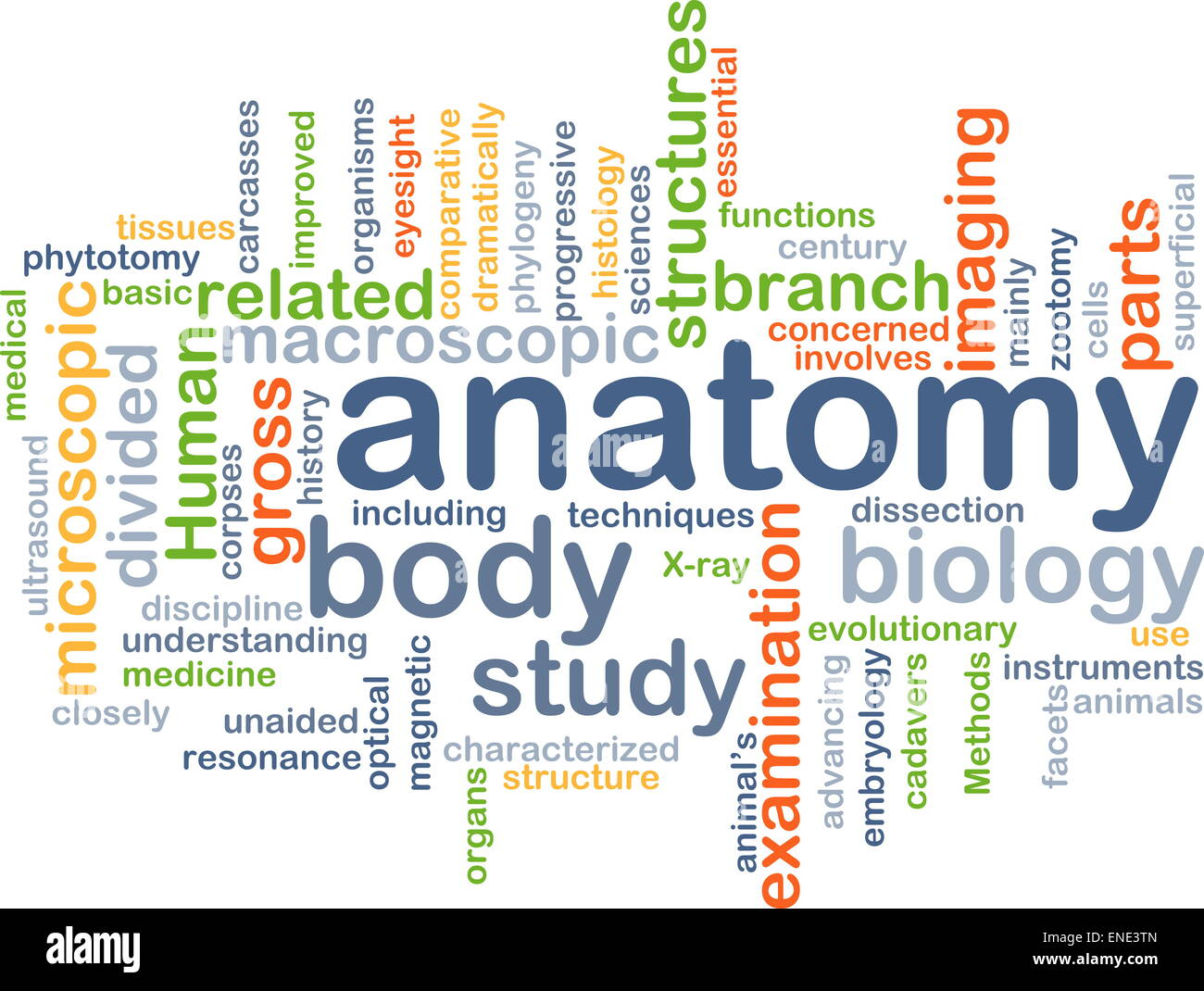 Anatomy Word Cloud Concept Stock Photos & Anatomy Word Cloud Concept ...