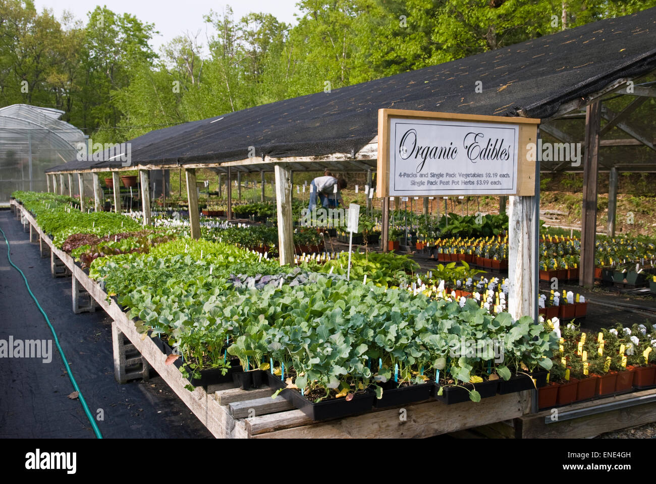 Organic herbs and vegetable plants for sale at a nursery in New York state - Stock Image