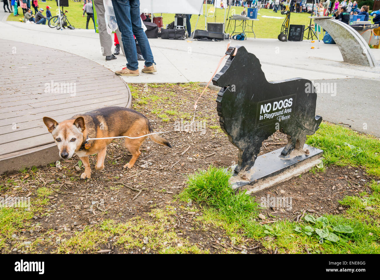 Dog tied to no dogs sign. - Stock Image