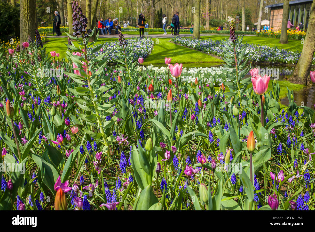 The beauty of the flowers in spring in the Keukenhof - Stock Image