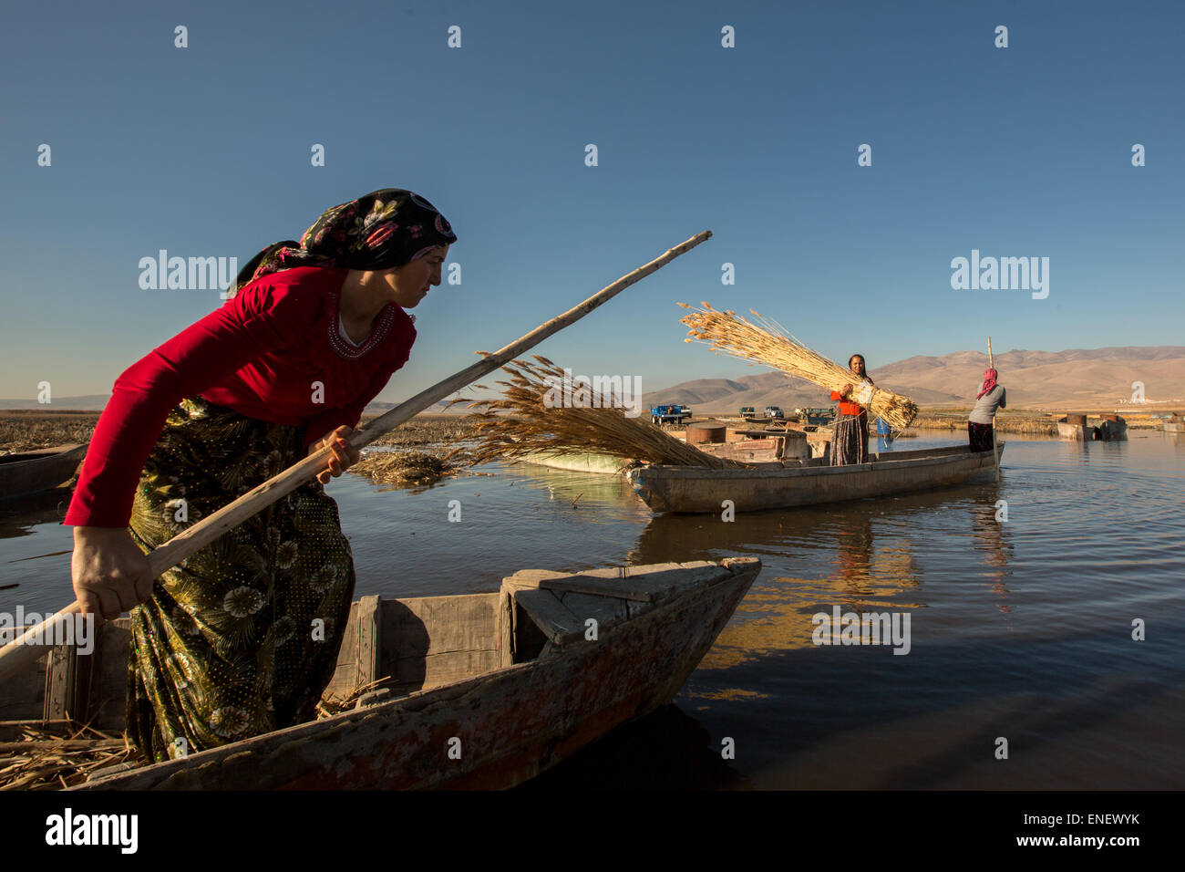 AFYONKARAHISAR,TURKEY - November 9,2013 : Unidentified woman workers harvest reeds and bulrush from the Lake Eber - Stock Image