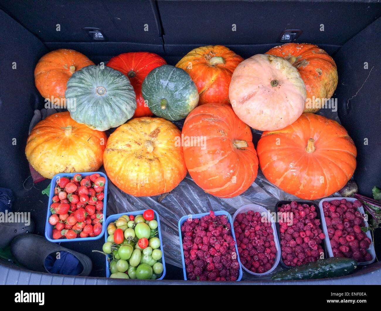 Fruit and pumpkins in car boot harvested from allotment in autumn - Stock Image
