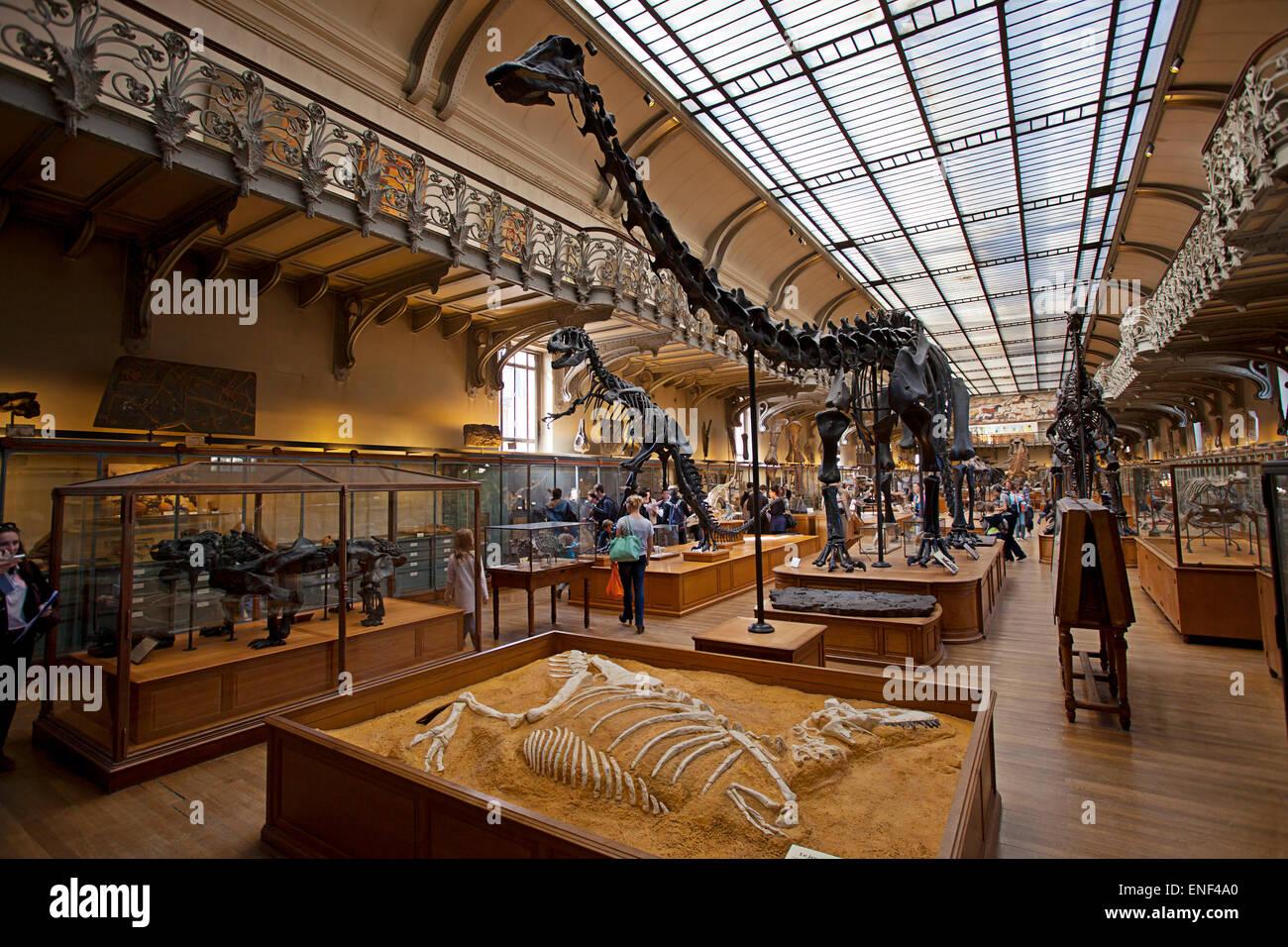Galeries d'Anatomie comparée et de Paléontologie. Gallery Paleontology, Natural History Museum, Paris - Stock Image
