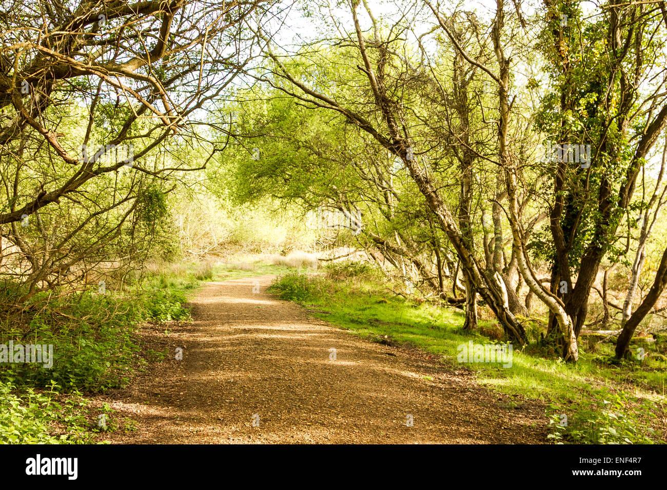Leafy pathway, Shadows, sunshine, - Stock Image