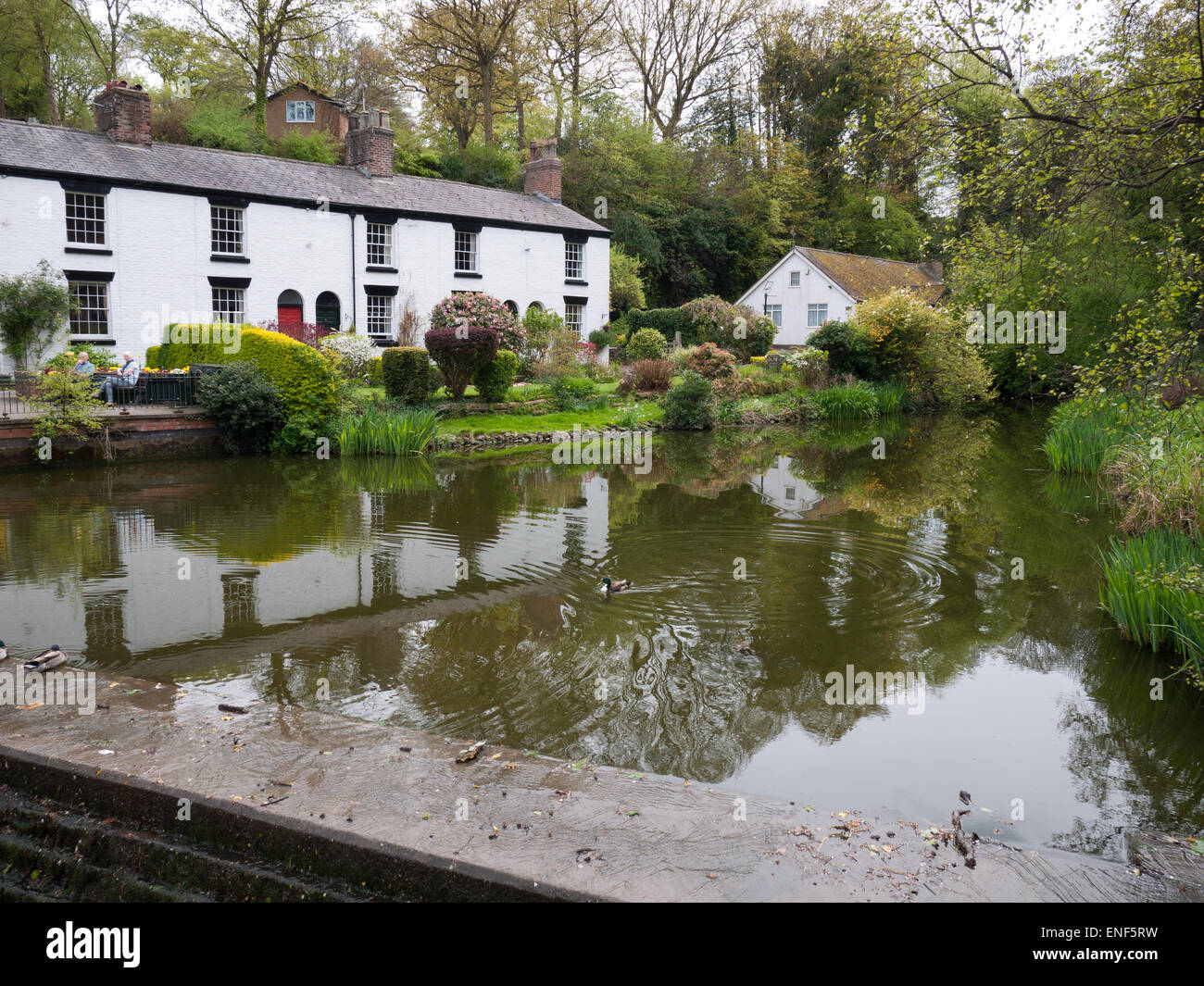 White cottages by a pool in Lymm village, Cheshire, UK - Stock Image