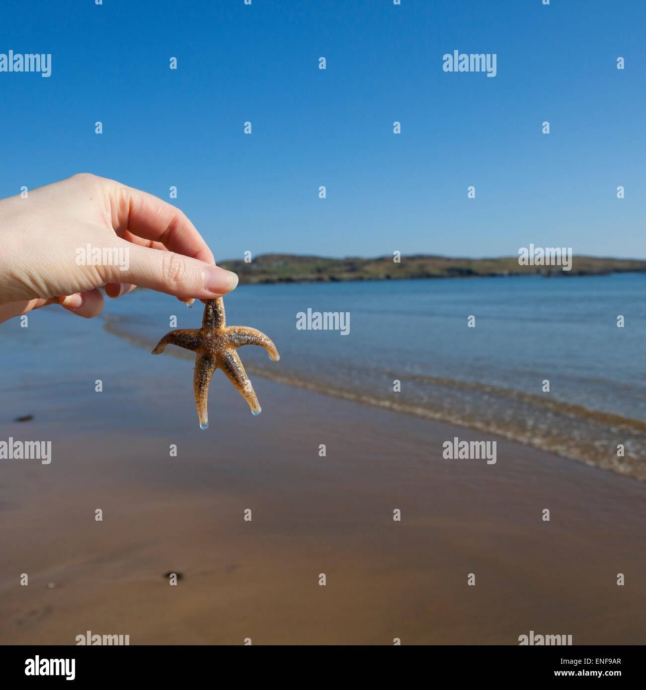 Hold holding a Starfish on a beach - Stock Image