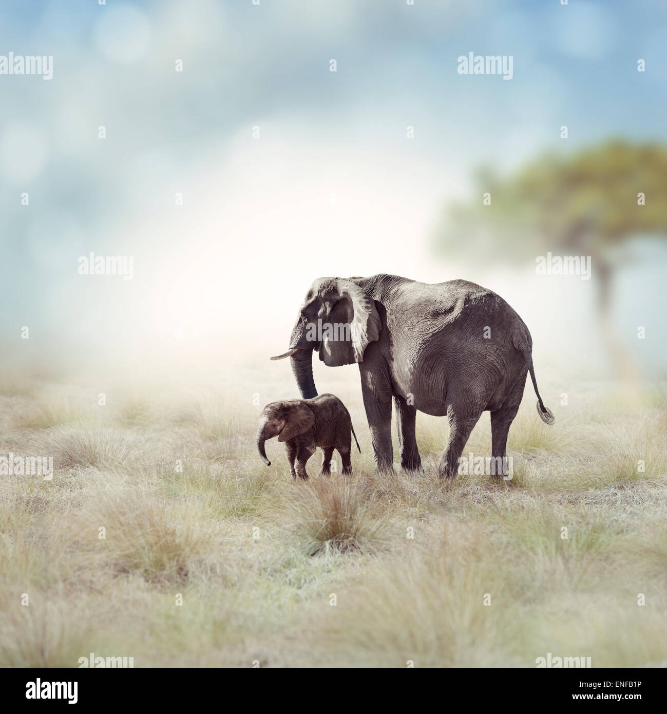 Young Elephant With Its Mother - Stock Image