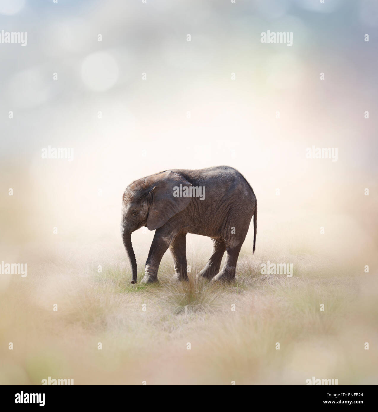 Portrait Of African Baby Elephant - Stock Image