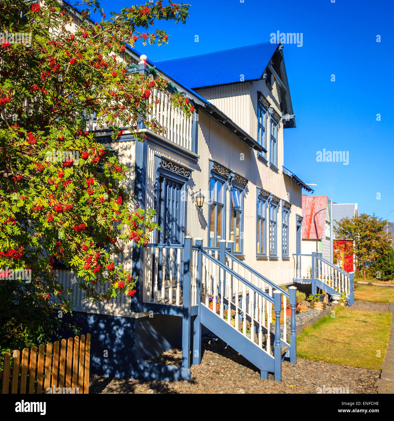 Traditional house in Seydisfjordur, Iceland with mountain ash tree in the foreground - Stock Image