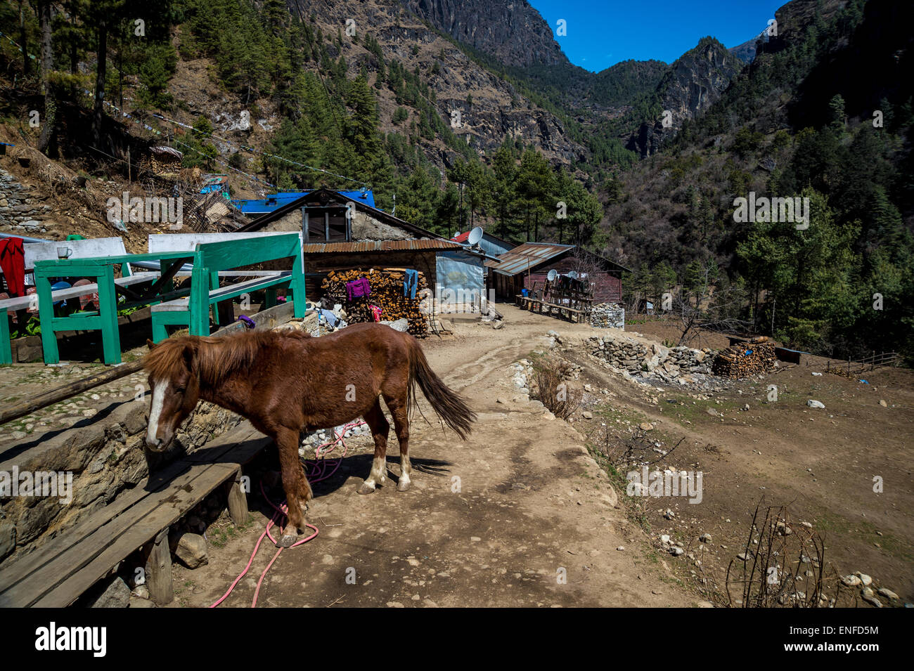 Horse in a village, on the way to Everest Base Camp, Nepal - Stock Image