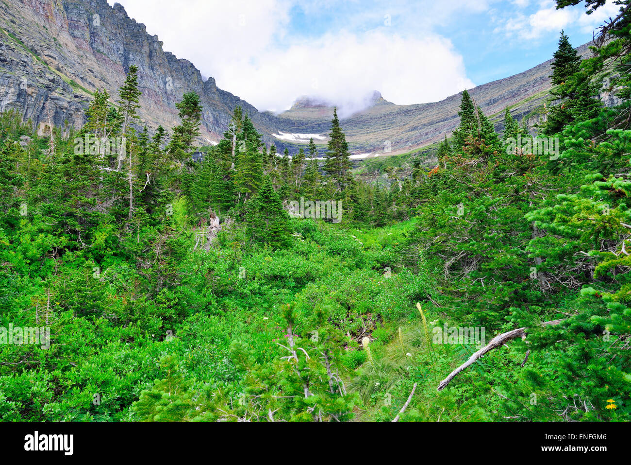 mountains and high alpine conifer forest in glacier national park in summer - Stock Image