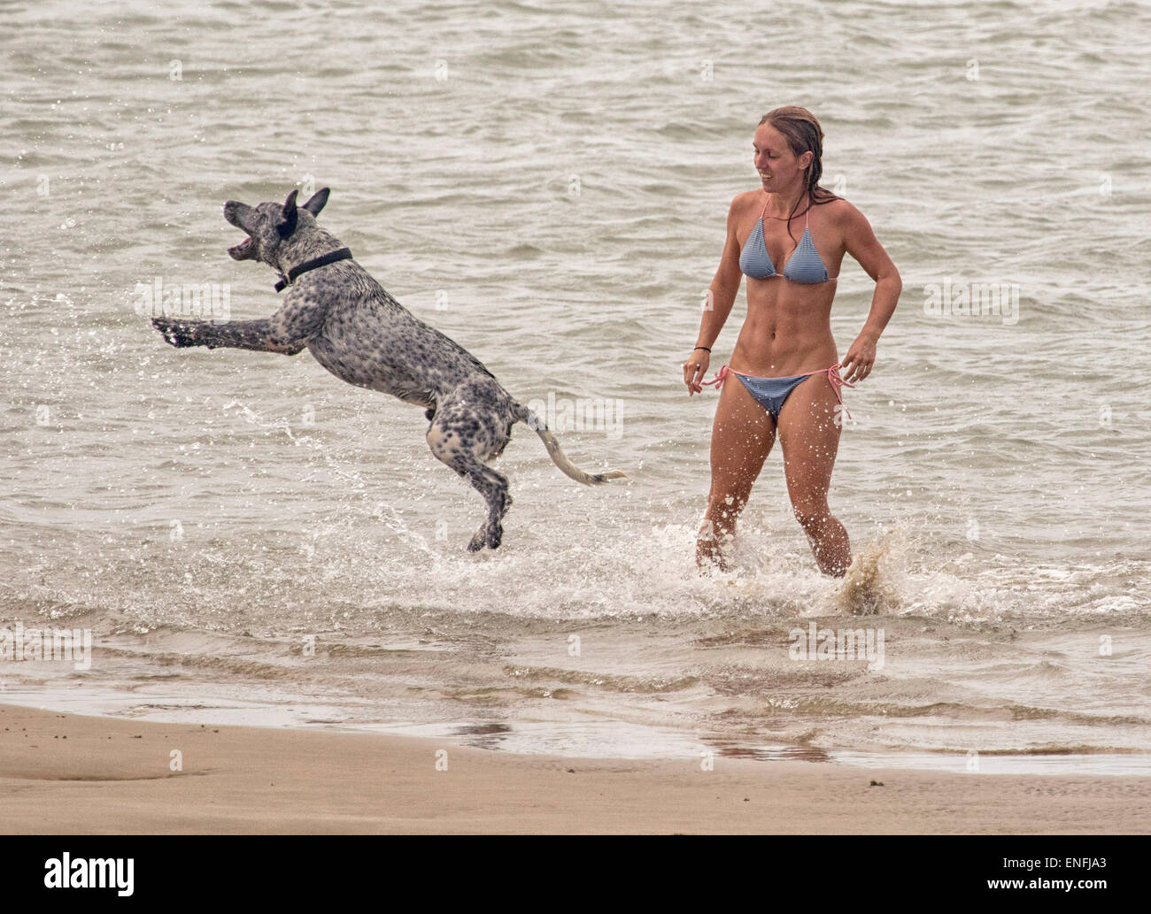 Young slim woman in bikini playing with leaping dog in shallow water at beach - Stock Image