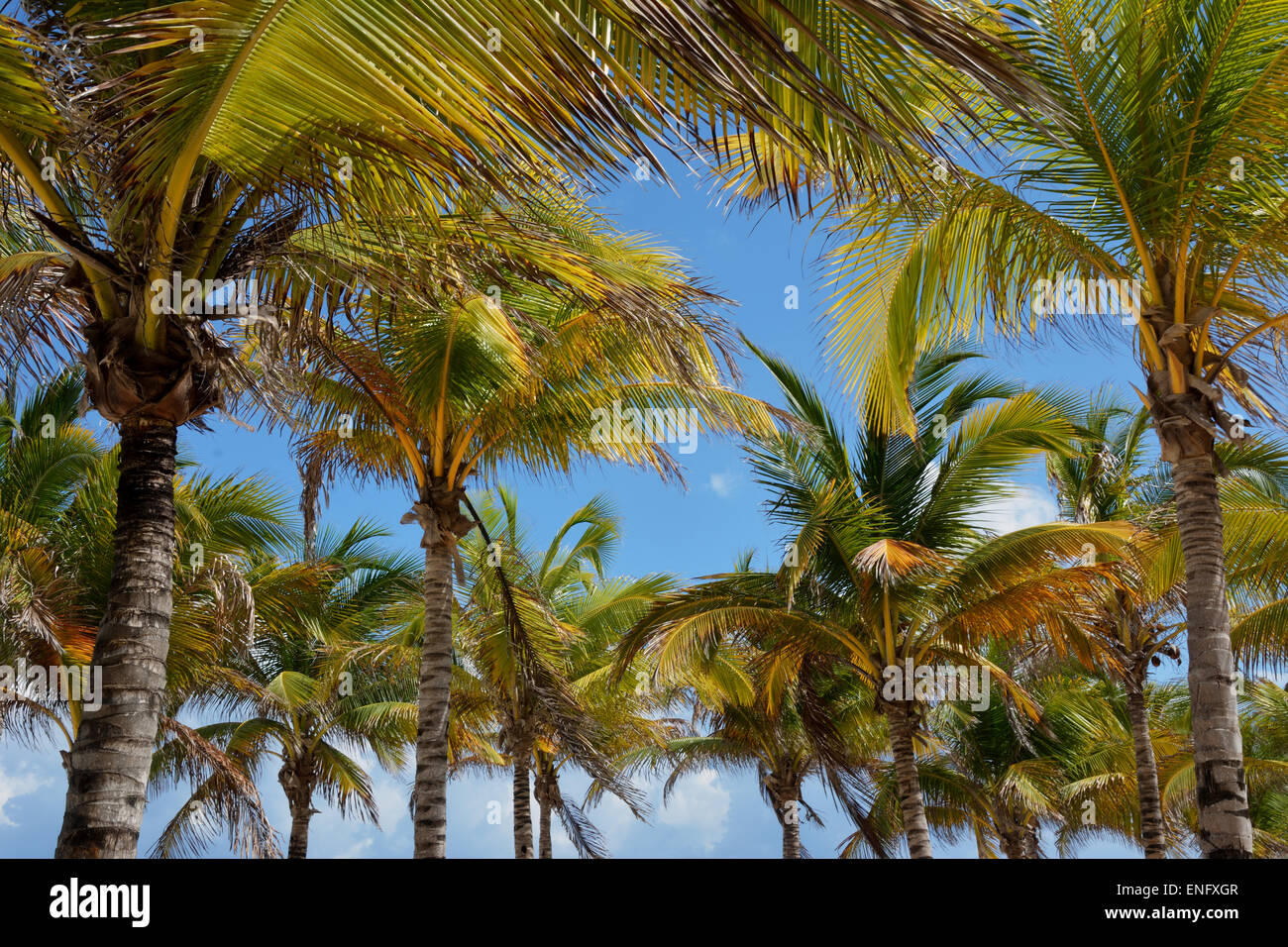 Palm trees on a tropical beach - Stock Image