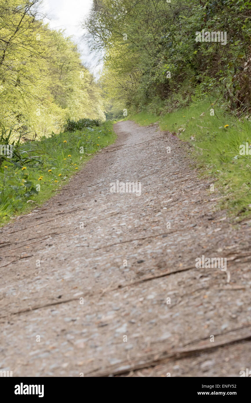 Tow path along the Basingstoke canal in Surrey, United Kingdom - Stock Image