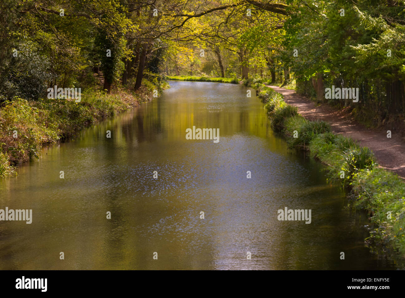 Basingstoke Canal in early spring, Surrey and Hampshire United Kingdom - Stock Image