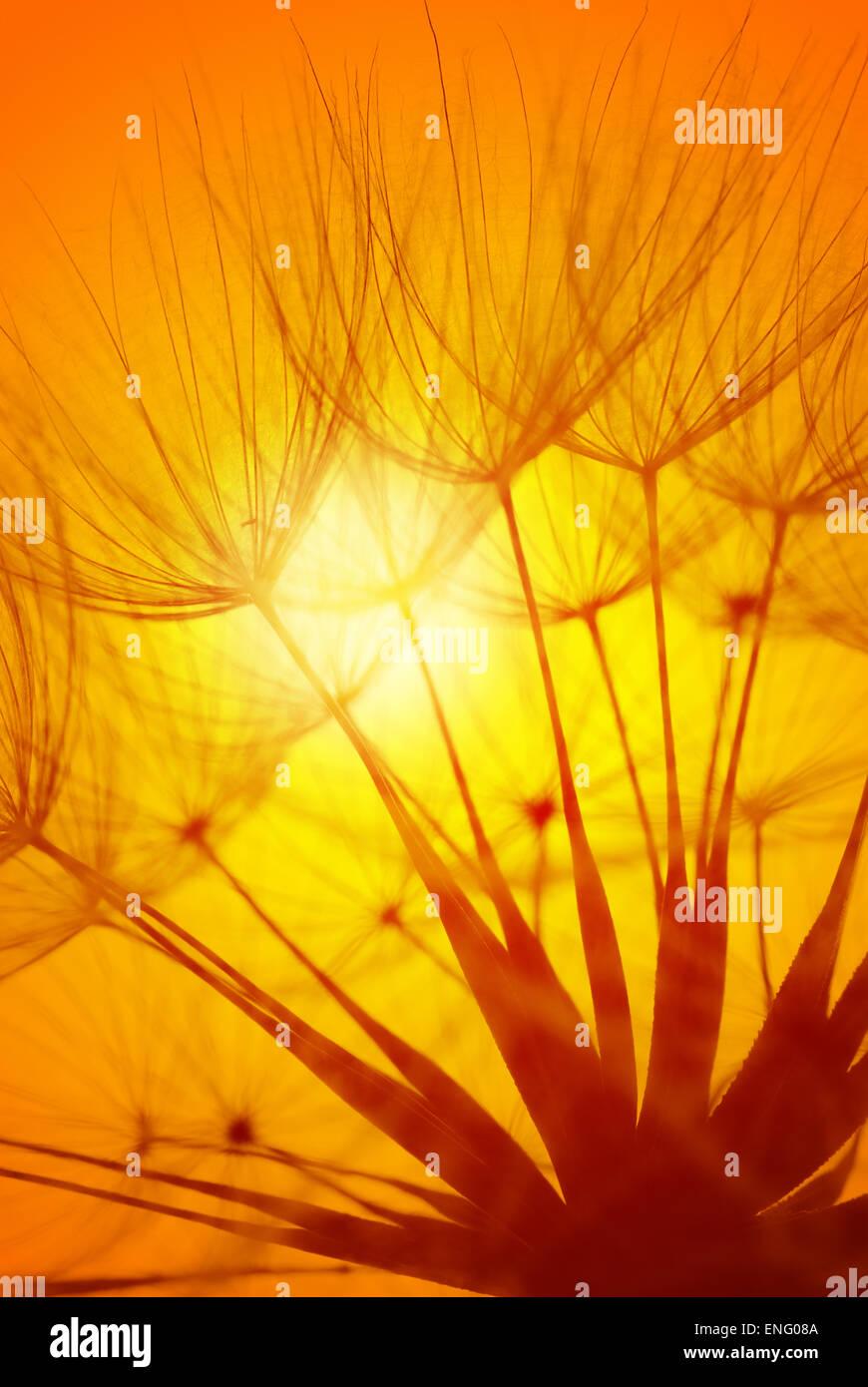 head of wind closk against setting golden warm orange glow of sun evening sunset - Stock Image