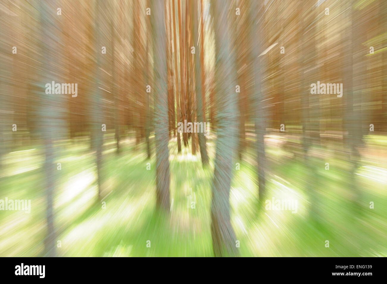 Movement concept: abstract photo of trees - Stock Image