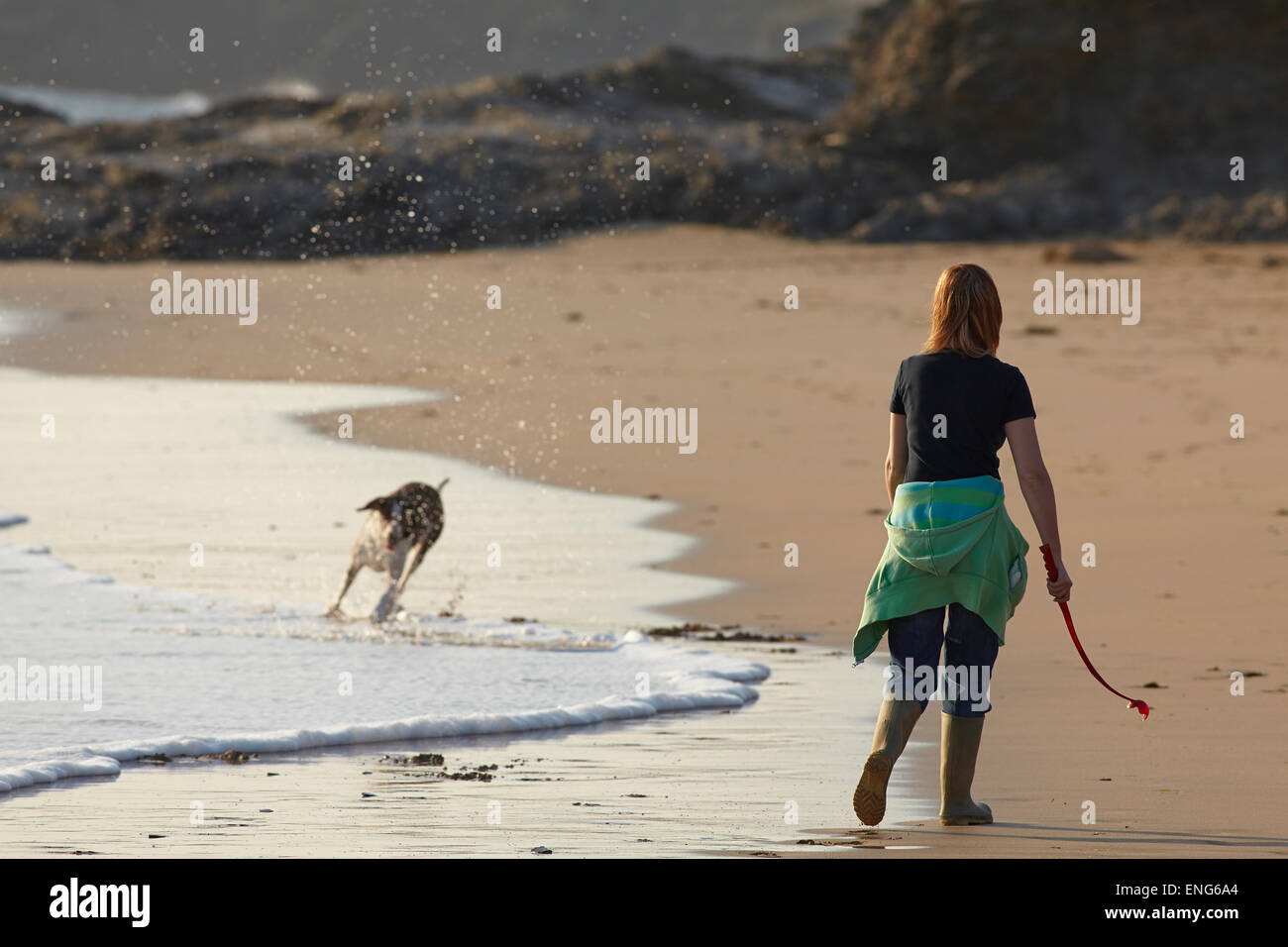 Walking the dog on the beach at Constantine Bay, near Padstow, Cornwall, Great Britain. Stock Photo
