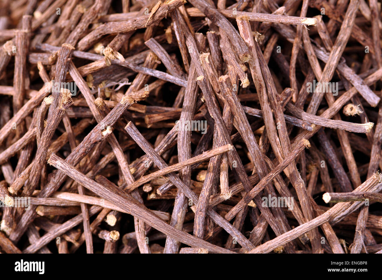 Licorice roots - Stock Image