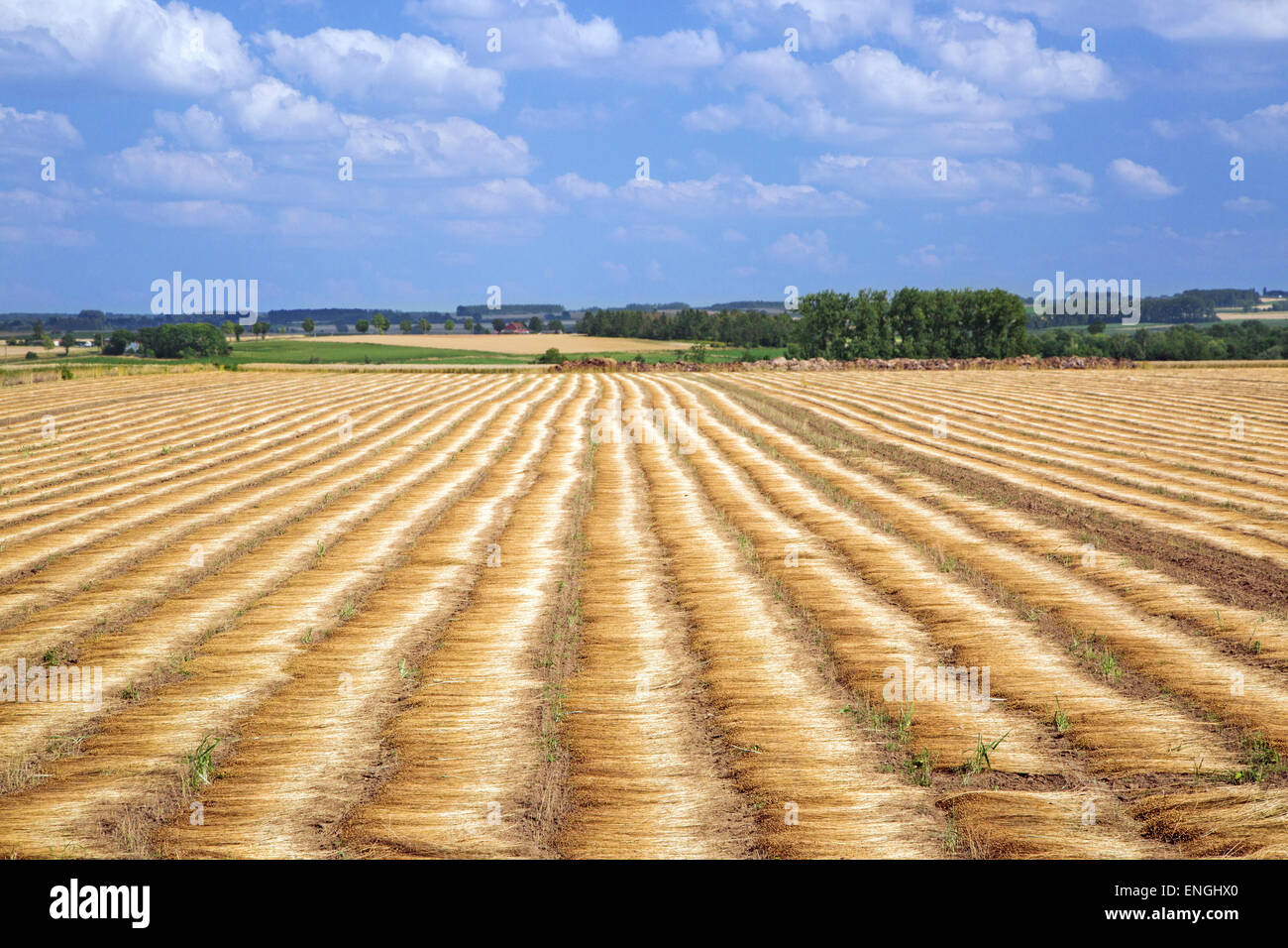 Farmland showing flax being dew or ground retted - Stock Image