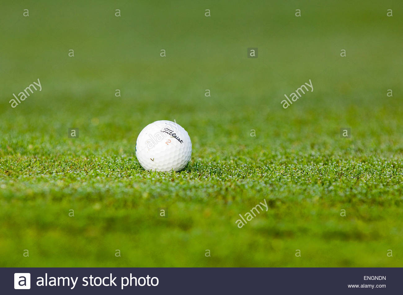 Golfball laying on a green - Stock Image