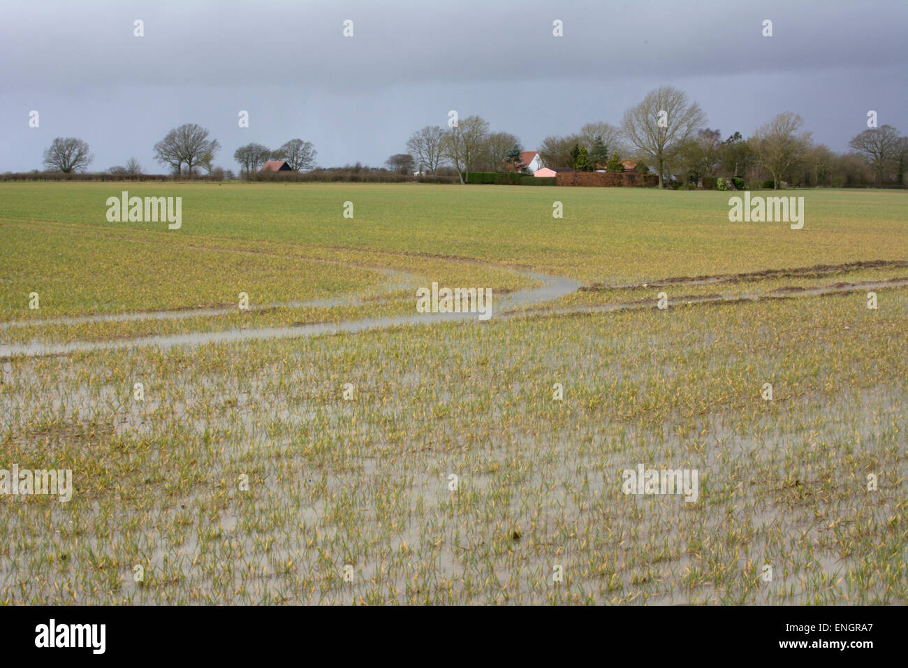 Flooded field in Norfolk, East Anglia, England Stock Photo